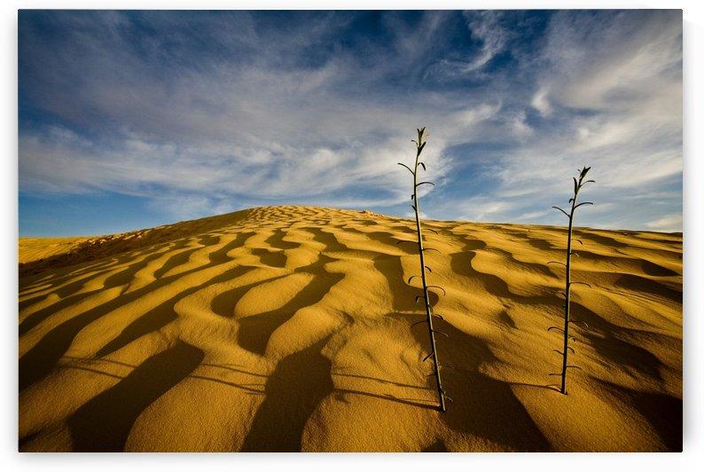 Sahara Desert, Tunisia, Africa by PacificStock