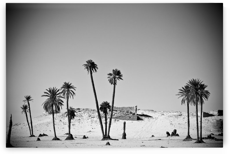 Palm Trees In The Sahara Desert, Douz, Tunisia by PacificStock