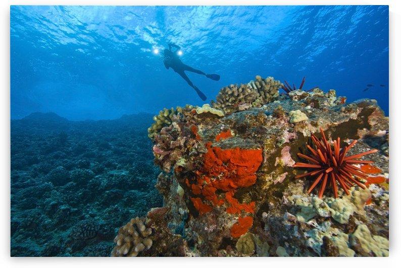 Molokini Crater, South Maui, Hawaii, Usa; Scuba Diver by PacificStock