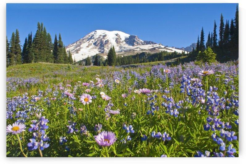 Wildflower Meadow, Mount Rainier National Park, Washington, Usa by PacificStock