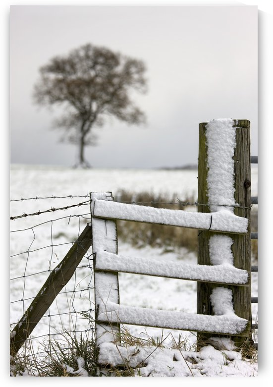 Fence In Winter by PacificStock
