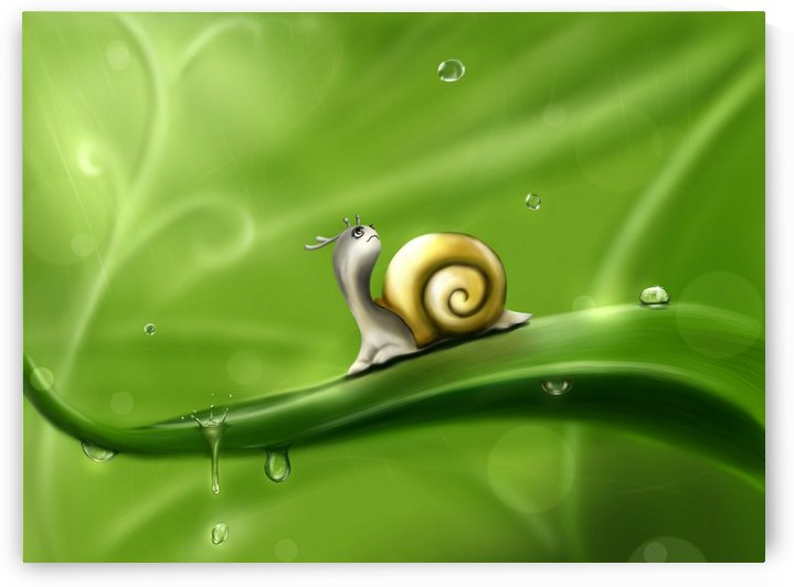 Snail by STOCK PHOTOGRAPHY