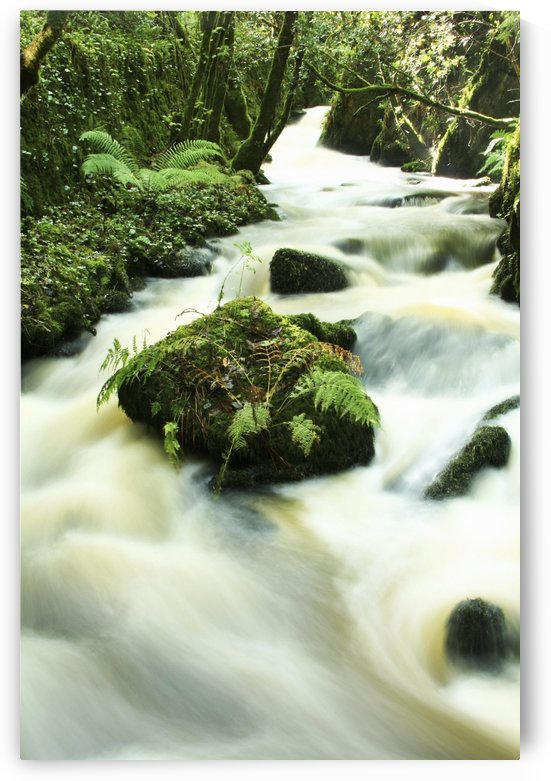 County Cork, Ireland, River by PacificStock