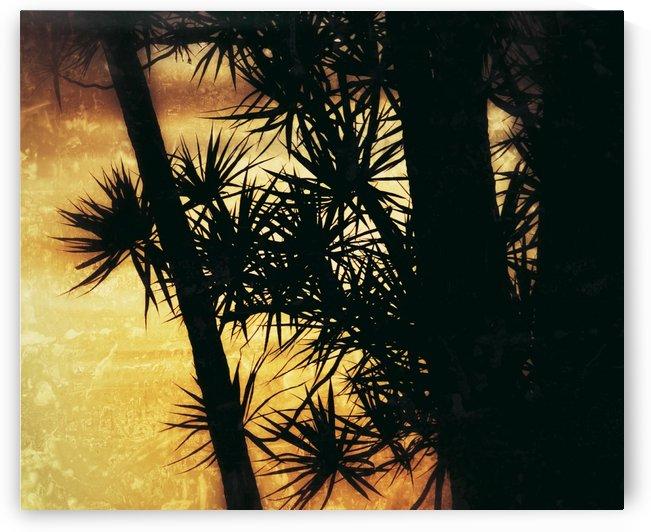 Golden Tree by Digitalu Photography