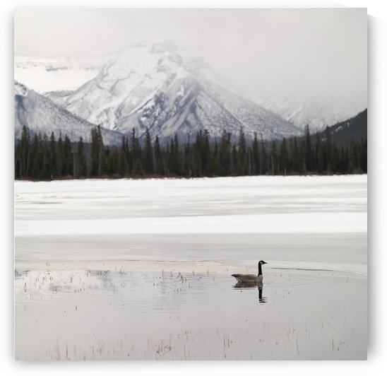 Winter Landscape, Banff National Park, Alberta, Canada by PacificStock