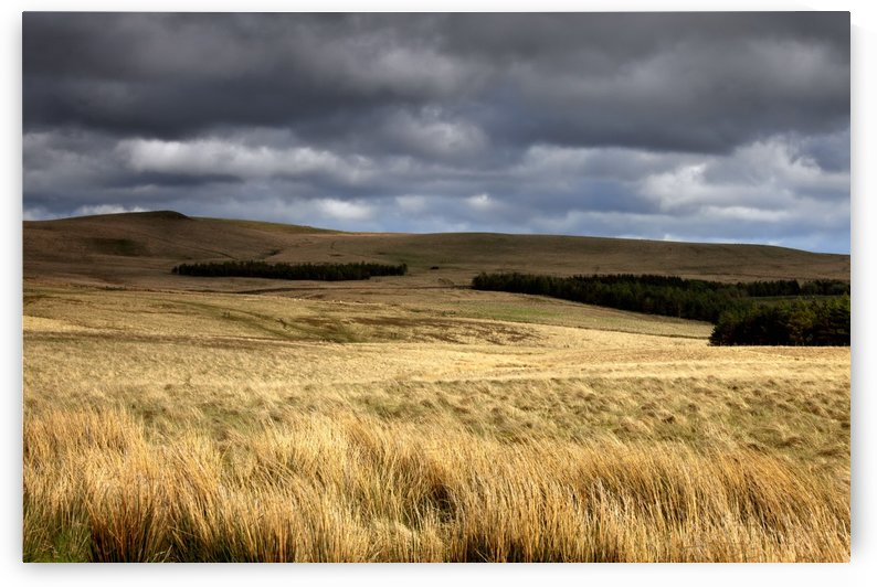 Field Of Wheat With Dark Clouds Overhead, Northumberland, England by PacificStock