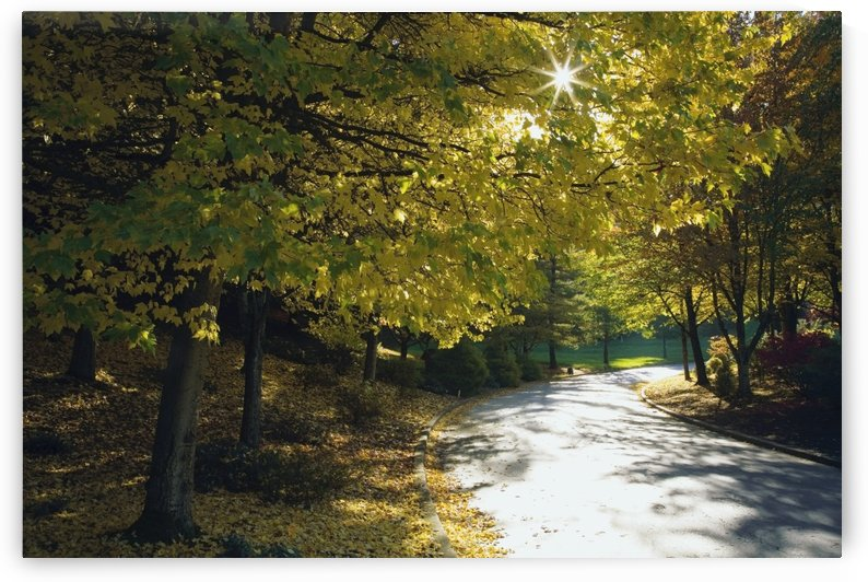 Road Among Autumn Trees by PacificStock