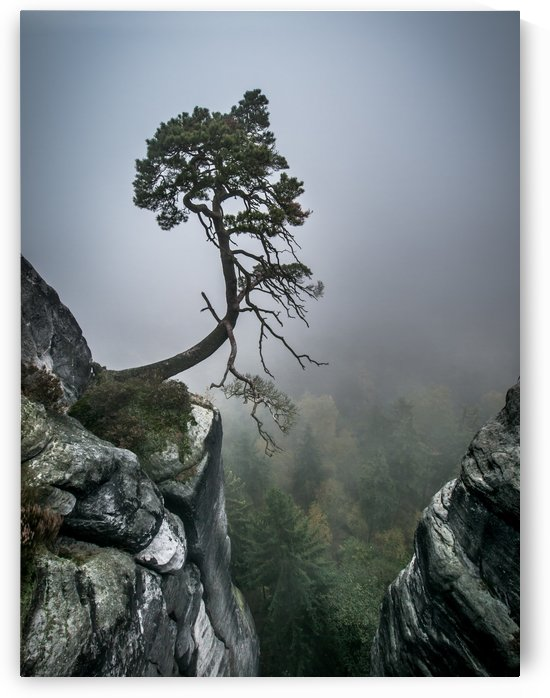 Lonely Tree on the Edge by Andreas Wonisch