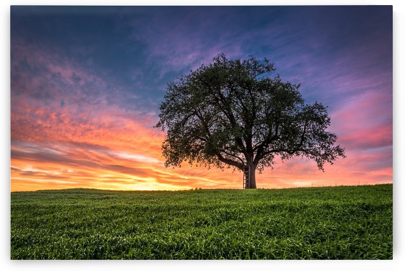 Lonely Tree at Sunset by Andreas Wonisch