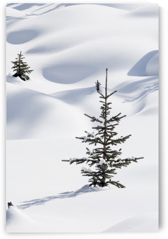 Banff National Park, Alberta, Canada; Trees In Snow Drifts At Lake Louise In Winter by PacificStock