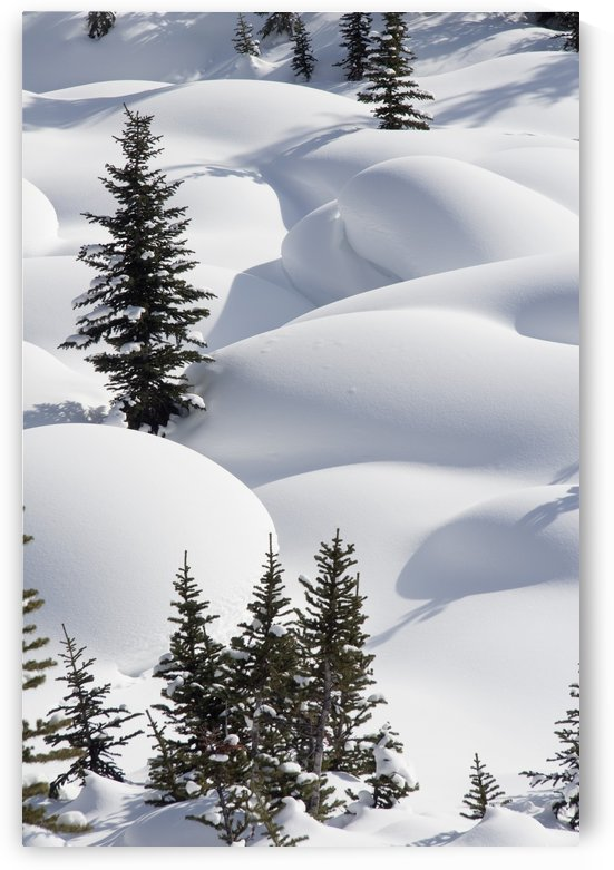Banff National Park, Alberta, Canada; Trees In Snow Drifts At Lake Louise by PacificStock