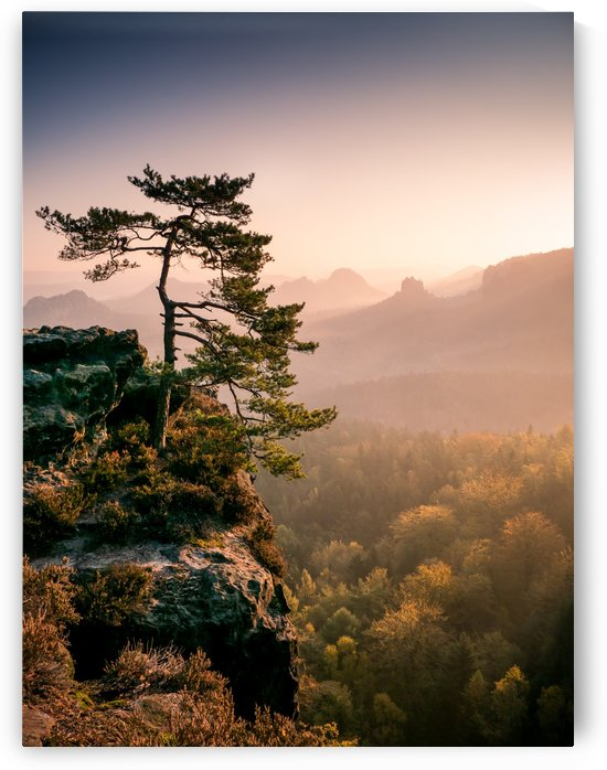 Tree at Sunrise in the Saxon Switzerland by Andreas Wonisch