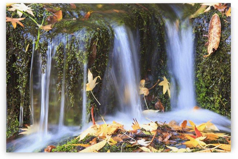 Oregon Cascades, Oregon, Usa by PacificStock