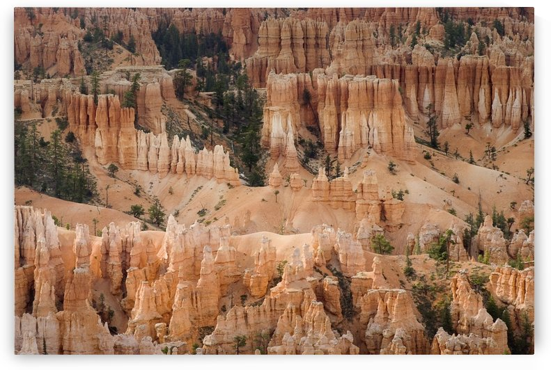 Utah, United States Of America; The Needles Of Bryce Canyon by PacificStock