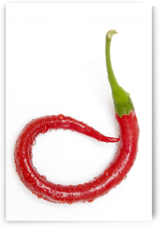 A Red Jalapeno Pepper That Has Curled by PacificStock