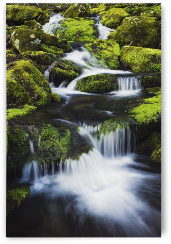 Great Smoky Mountains National Park, Tennessee, United States Of America; Small Mountain Creek And Moss Covered Rocks by PacificStock