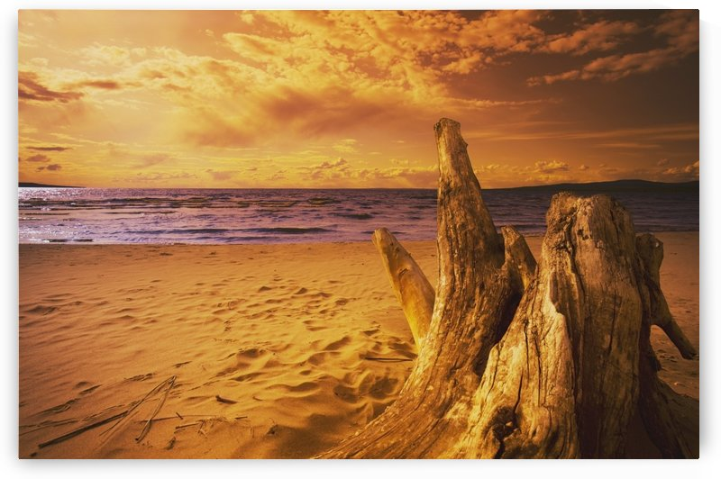 Alberta, Canada; Driftwood On A Beach At Sunset by PacificStock