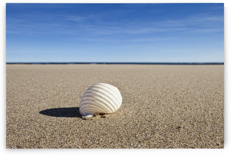 Northumberland, England; A Seashell On The Sand On Low Newton Beach by PacificStock