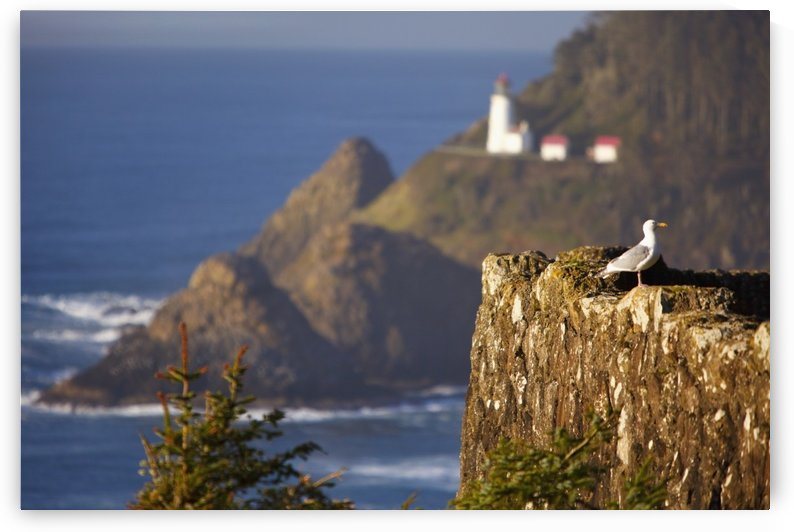 Oregon, United States Of America; Heceta Head Lighthouse Along The Coast by PacificStock