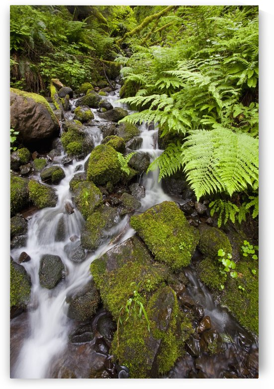 Oregon, United States Of America; Lush Green Foliage Along A Small Creek In Columbia River Gorge National Scenic Area by PacificStock