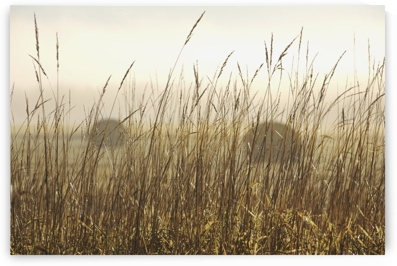Bales Of Hay In A Field In The Fog; Thunder Bay, Ontario, Canada by PacificStock