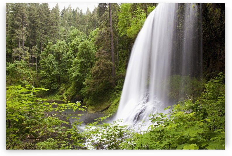 North Middle Falls In Silver Falls State Park; Oregon, Usa by PacificStock