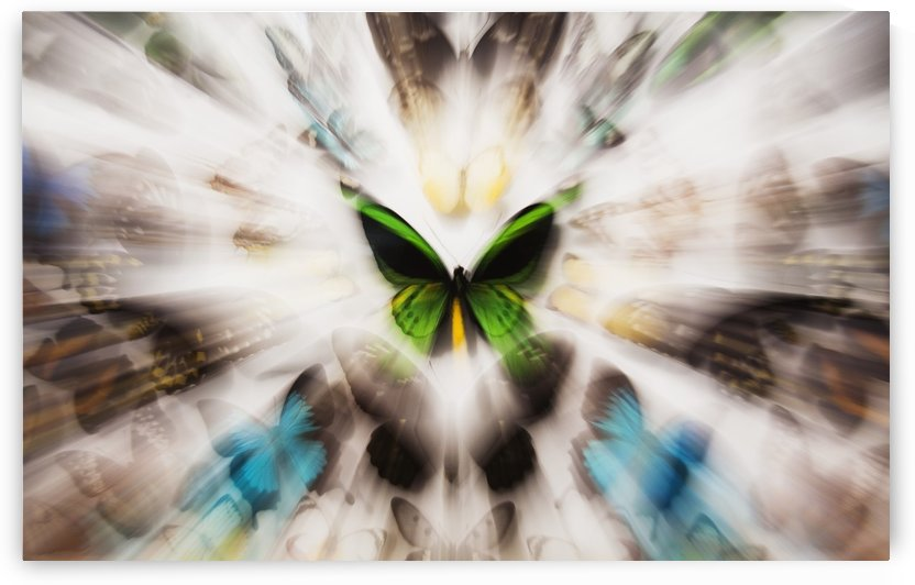 Focus On A Green Butterfly With Images Of Butterflies Surrounding It by PacificStock