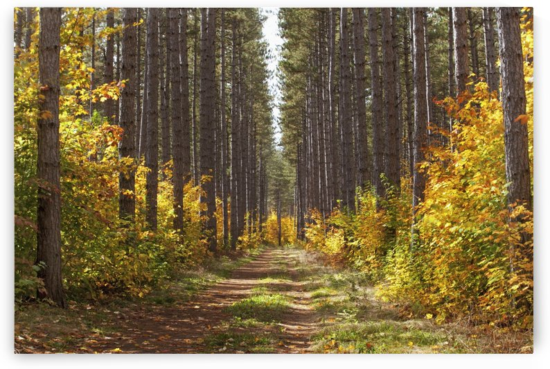 Path Into The Forest In Autumn; Sault St. Marie, Ontario, Canada by PacificStock