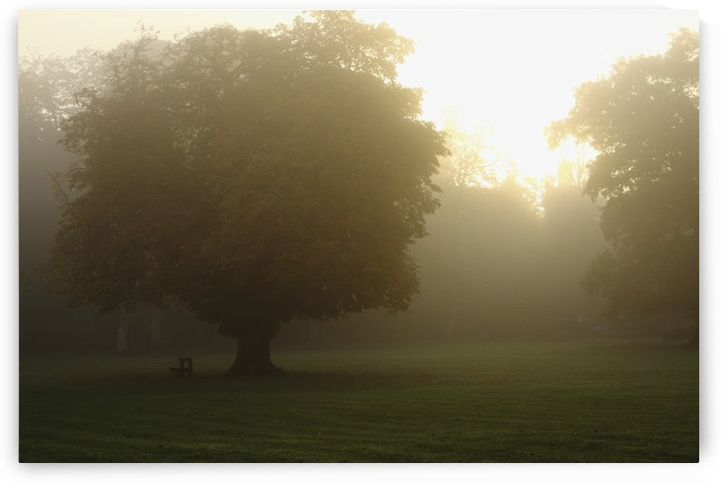 Misty Morning In Cahir In The Munster Region; County Tipperary, Ireland by PacificStock