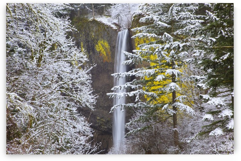Snow Adds Beauty To Latourell Falls, Columbia River Gorge National Scenic Area; Oregon, United States Of America by PacificStock
