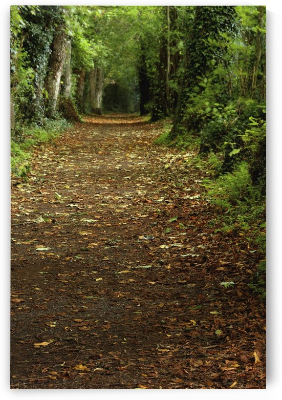 Path Through Woods; Cahir, County Tipperary, Ireland by PacificStock