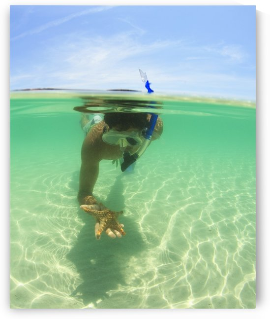A Young Man Snorkels Holding A Starfish Underwater; La Paz, Baja, California, Sur Mexico by PacificStock