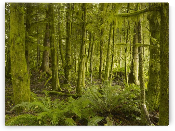 A Lush Forest; Tofino, British Columbia, Canada by PacificStock