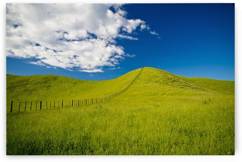 Wooden Fence Posts Running Through A Grassy Field; New Zealand by PacificStock