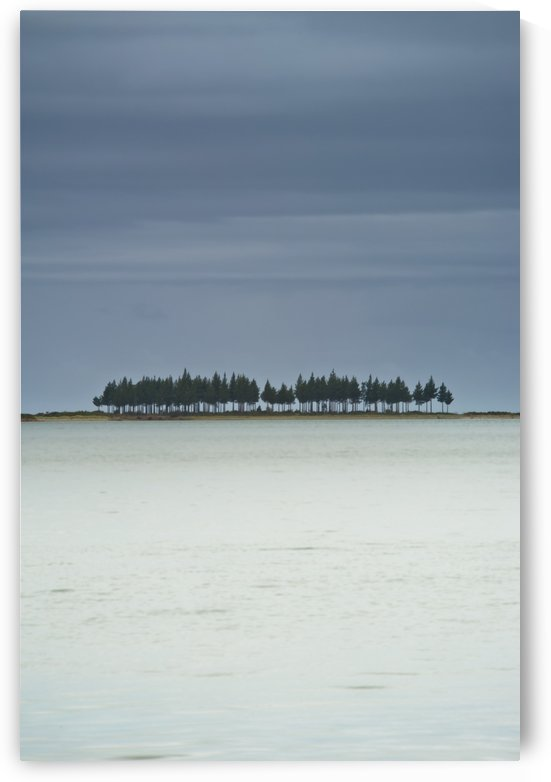 A Row Of Trees Along The Coast; Farewell Spit, South Island, New Zealand by PacificStock