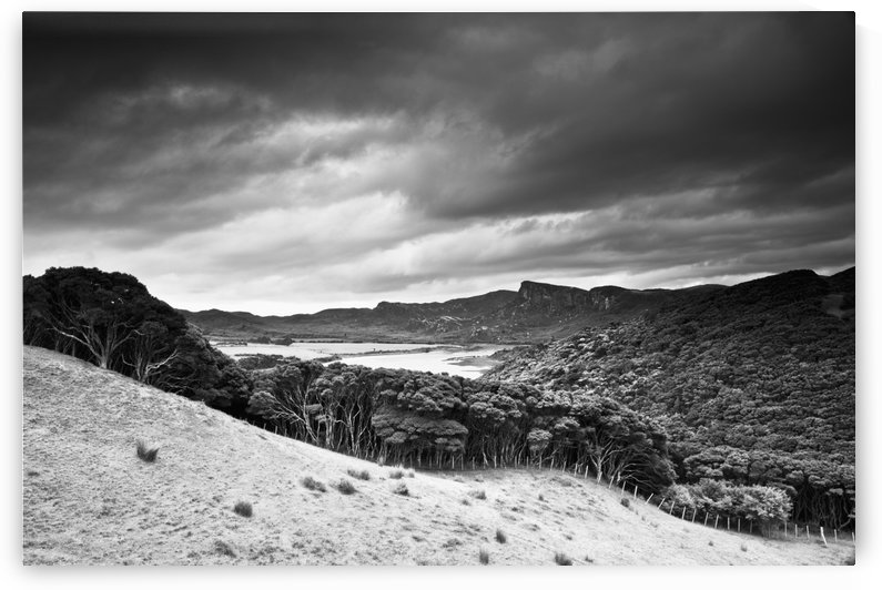 A Forest Area Along The Coast Under A Dark Cloudy Sky; Farewell Spit, South Island, New Zealand by PacificStock