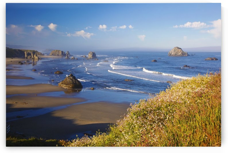 Wildflowers And Rock Formations Along The Coast At Bandon State Park; Bandon, Oregon, United States of America by PacificStock