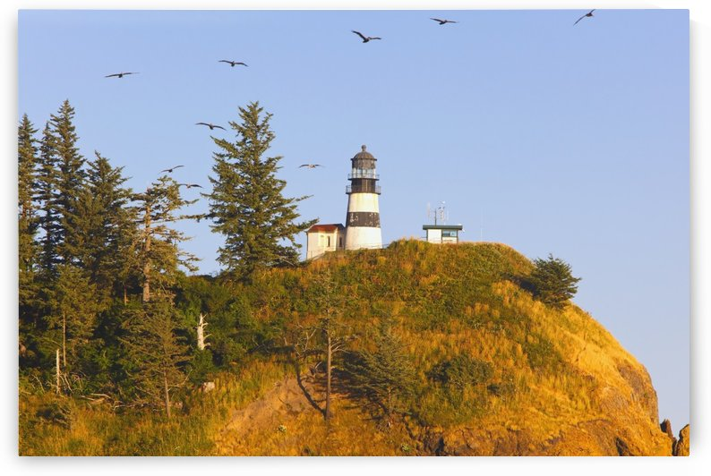Birds In Flight Over Cape Disappointment Lighthouse; Ilwaco, Washington, United States of America by PacificStock