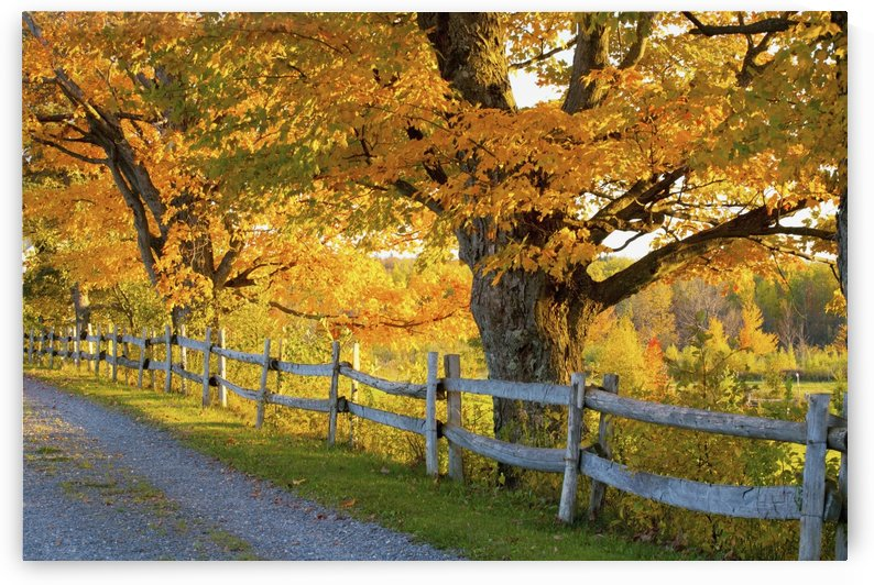 Trees In Autumn Colours And A Fence Line A Road; Lawrenceville, Quebec, Canada by PacificStock