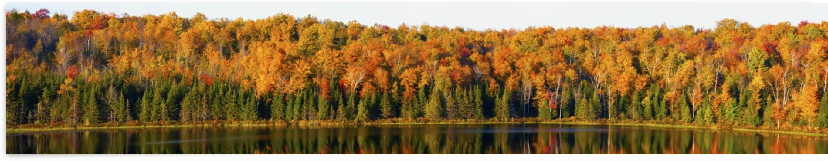 Panorama Of Trees Along The Water's Edge In Autumn Colours; South Bolton, Quebec, Canada by PacificStock