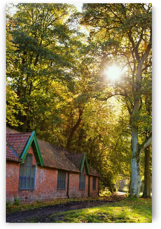 Sunlight Shines Through The Trees Onto The Grass Beside A Brick Building; Durham, England by PacificStock
