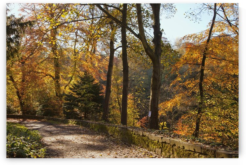 A Path Lined With Trees In Autumn Colours; Durham, England by PacificStock