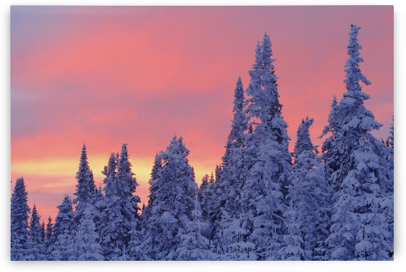 View Of Snow-Covered Trees And Sky At Twilight, Quebec, Canada. by PacificStock