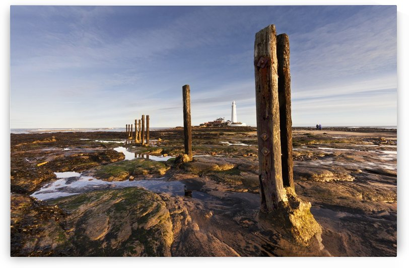 Wooden Posts At The Water's Edge With A Lighthouse In The Distance At Whitley Bay; Northumberland, England by PacificStock