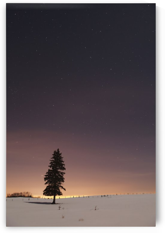Stars In The Night Sky With A Lone Tree; Thunder Bay, Ontario, Canada by PacificStock