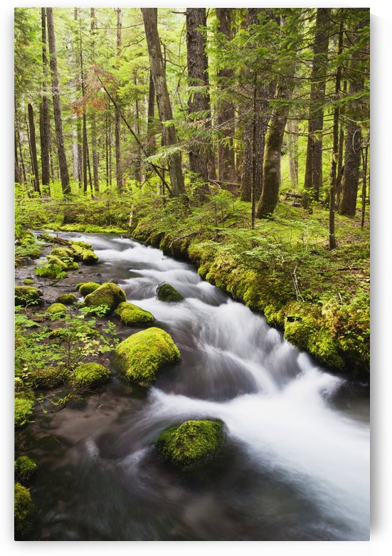 Still Creek In Mount Hood National Forest In The Oregon Cascade Mountains; Oregon, United States of America by PacificStock