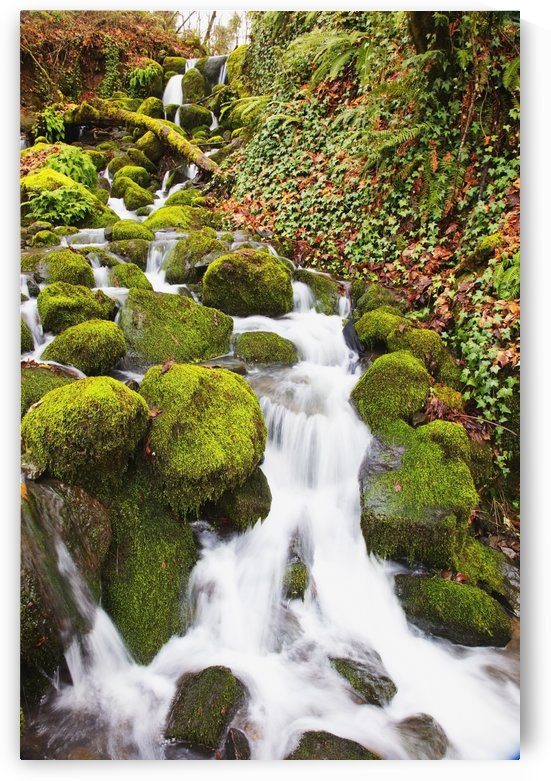 Green moss along small waterfall;Happy valley oregon united states of america by PacificStock
