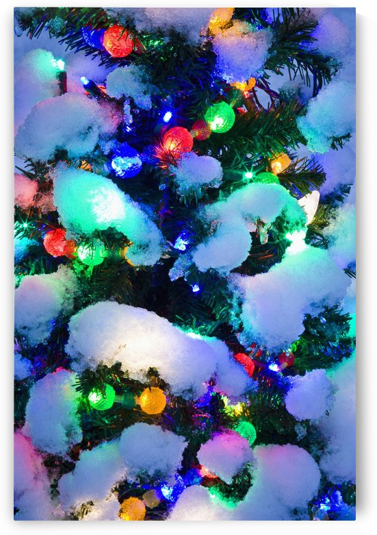 Close Up Of A Multi-Colored Christmas Tree Lit At Dusk Outside In Winter by PacificStock