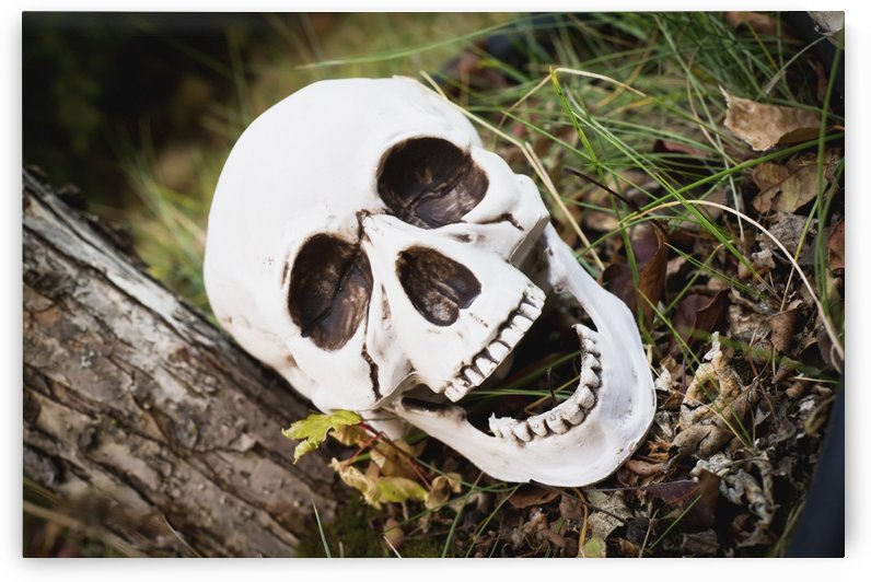 Decorative skull at halloween;Millet alberta canada by PacificStock