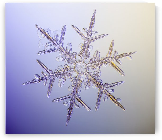 Photo-microscope view of a real snowflake showing the classic 6-sided star shape. by PacificStock